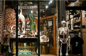Photo of The Evolution Store storefront in New York, New York