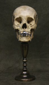 Photo of a real human skull from Museum Oddities at www.museumoddities.com