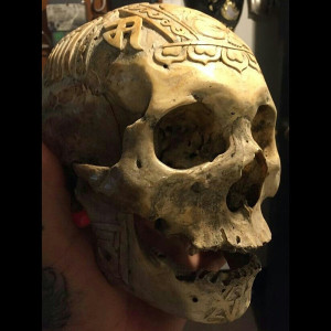 Photo of a real human skull from The Skull Store in Toronto, Canada