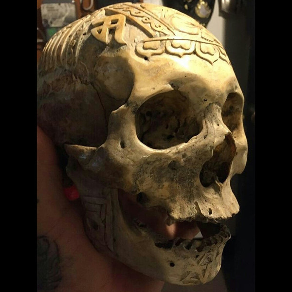 How To Obtain A Real Human Skull A Guide For Buyers Sellers And